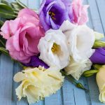 Kinds Of Flowers For Particular Occasions